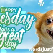 Happy Tuesday - Have a Great Day